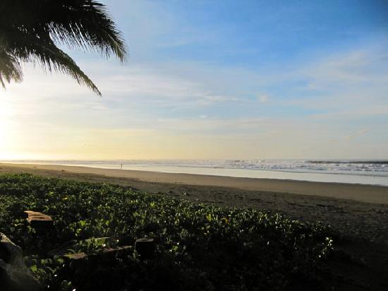 La Tortuga Verde: beach