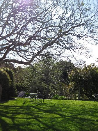 Spicers Clovelly Estate: Jacaranda Tree