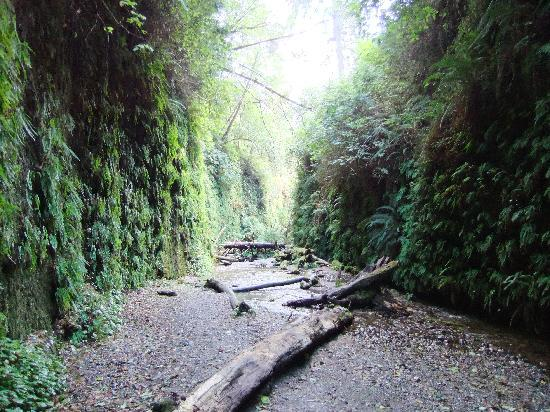 Palm Cafe & Motel: @ Fern Canyon... this is what awaits you