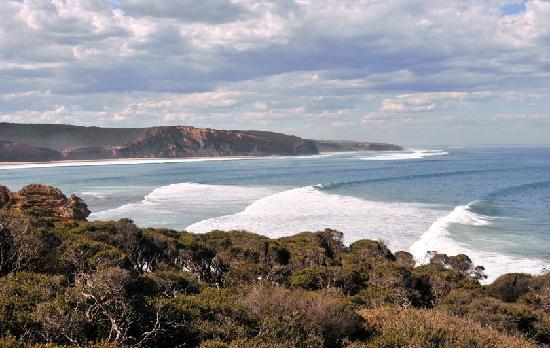 Surf Coast Walks - Day Tours: anglesea swell