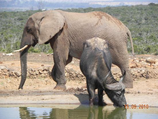 The Green Tree Guest Cottages: Addo Elephant Park
