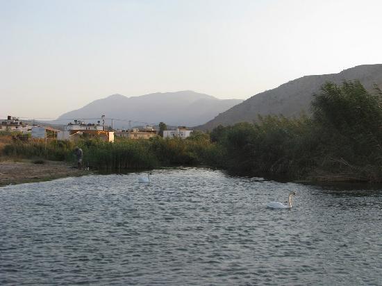 Minoas Hotel: The lagoon with wild swans