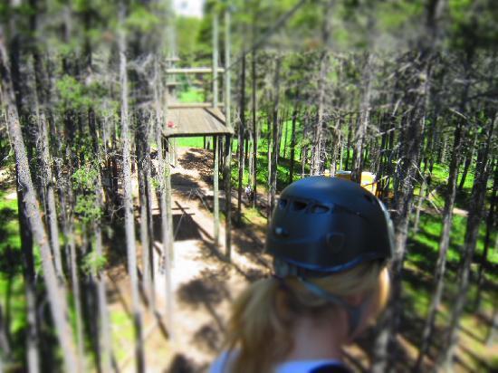 Treeosix Adventure Parks: Last look towards the Woodland's Skybridge