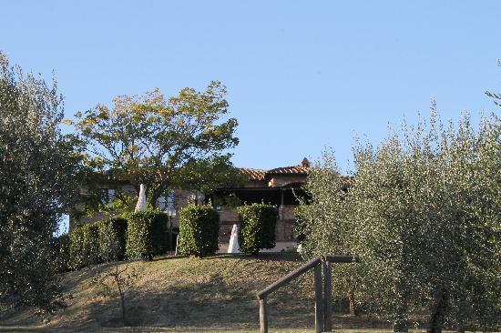 Agriturismo Sanguineto Montepulciano Hotel: Sanguineto visto dall' ulivetto