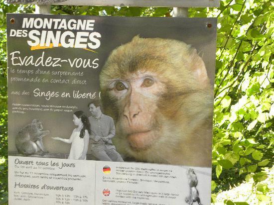 La Montagne des Singes : Affenwald Hinweisschild