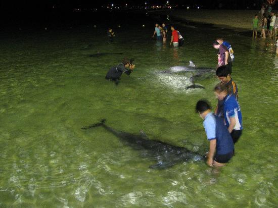 รีสอร์ทแทงกาลูมม่าไอส์แลนด์: Dolphin feeding