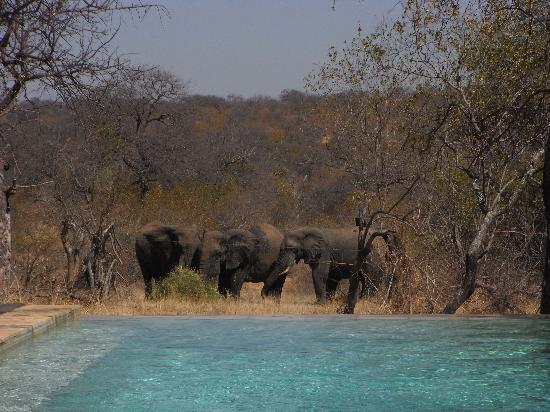 Balule Nature Reserve, Zuid-Afrika: A welcome party as we arrived!