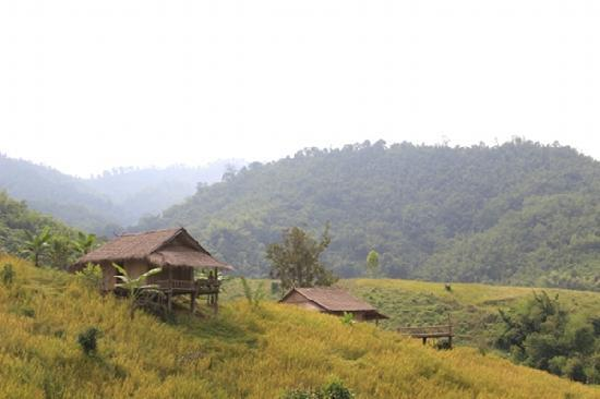 Bamboo Nest de Chiang Rai: Two of the huts where you could be staying!