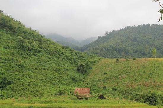 Bamboo Nest de Chiang Rai照片
