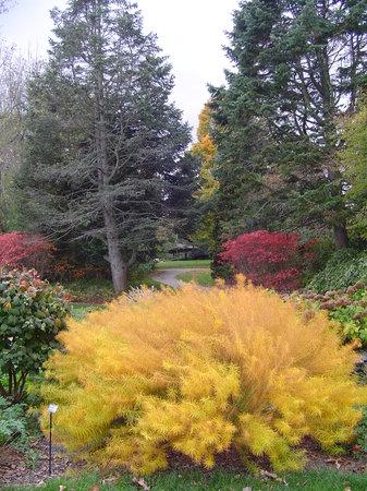 Klehm Arboretum & Botanic Garden : Klehm Arboretum