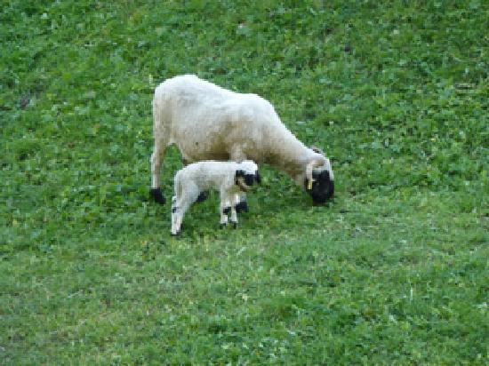 Carina Hotel: Hike view - Sheep