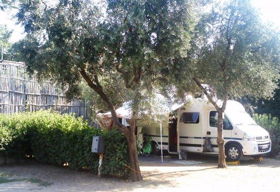 Camping I Pini