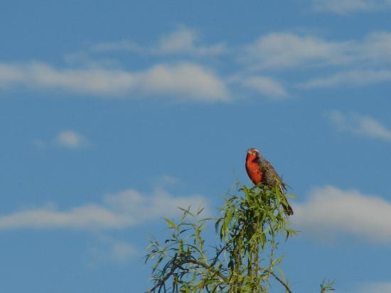 Barreal, Argentine : Naturaleza