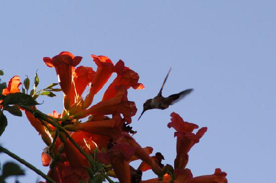 Inn at Civano: Enjoy the Hummingbirds on the patio!