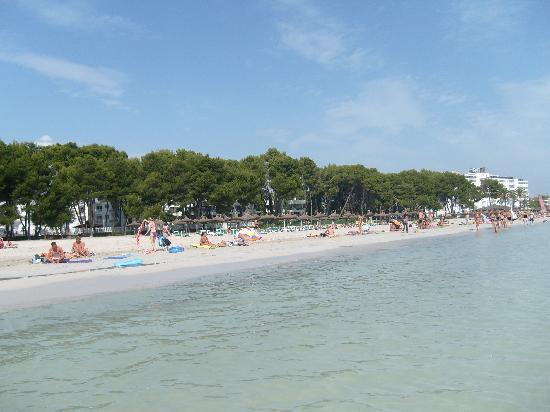 Alcudia Beach Aparthotel: the beach north