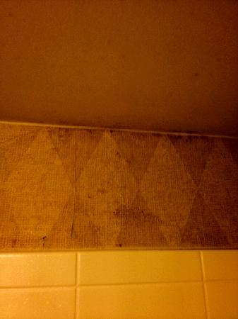 Residence Inn Austin South: moldy wallpaper