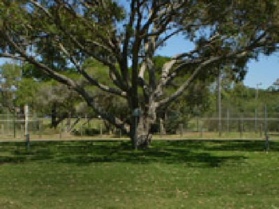 Hawks Nest, أستراليا: Hawks Nest Beach Holiday Park