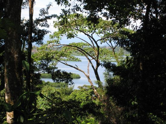 La Loma Jungle Lodge and Chocolate Farm: View from the highest jungle hut