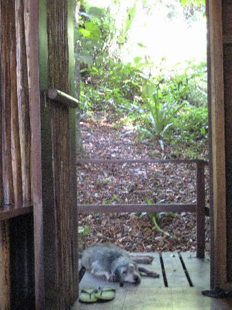 La Loma Jungle Lodge and Chocolate Farm: 'Goose' keeping guard