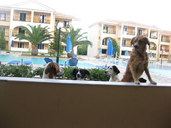 Alykanas Village Hotel: the dogs wanting 2 come in our room