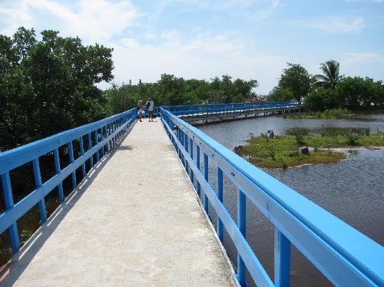 Hotel Playa Costa Verde: The bridge to the beach.