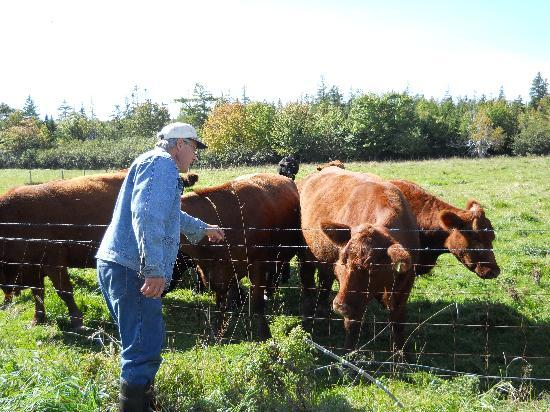Clayton Farm Bed & Breakfast: Isaac & His Cattle