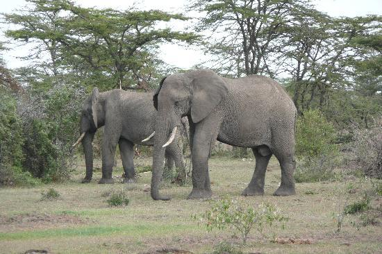 Kicheche Valley Camp: Sleeping elephants