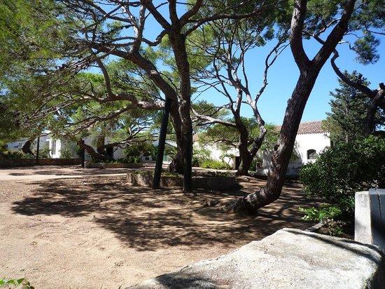 Compendio Garibaldino: un albero di 140 anni