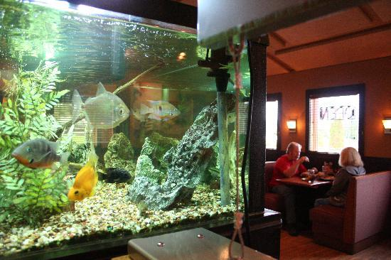 Kids and adults like our 100 Gallon fish tank - Picture of