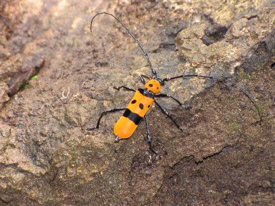 Mawphlang Sacred Forest: colourful insects