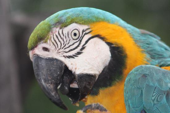 Araras Pantanal Ecolodge: ARARA