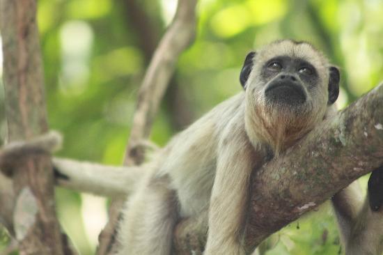 Araras Pantanal Ecolodge: MACACO CANSADO