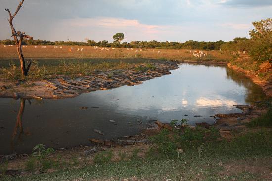 Araras Pantanal Ecolodge: vista na pousada