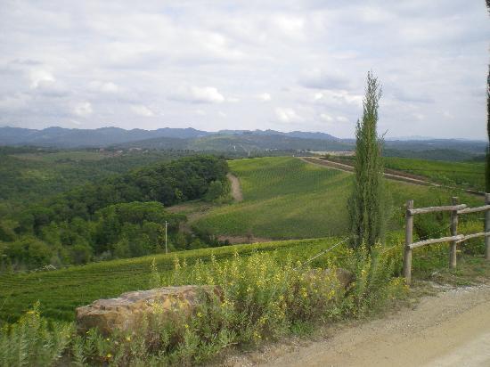Borgo Carpineto: paesaggio circostante