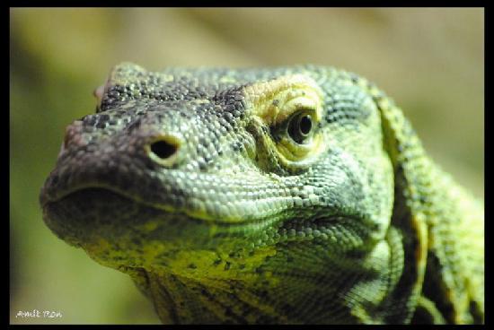 Zoo de Barcelona: Komodo Dragon