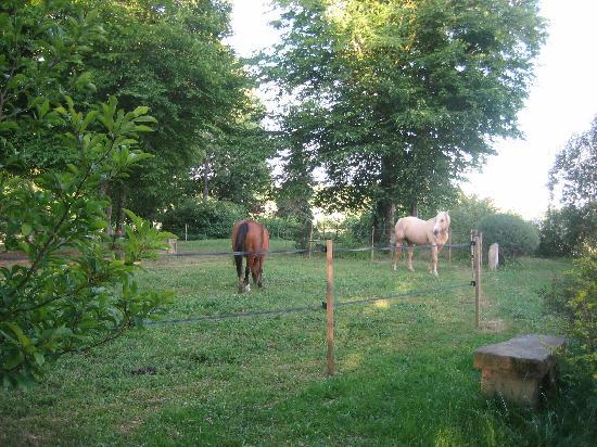 La Maison des Buis: les chevaux