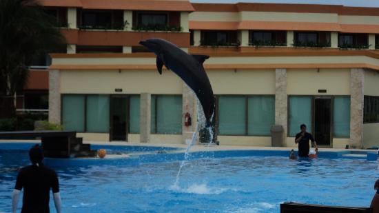 Grand Bahia Principe Tulum : dolphin show
