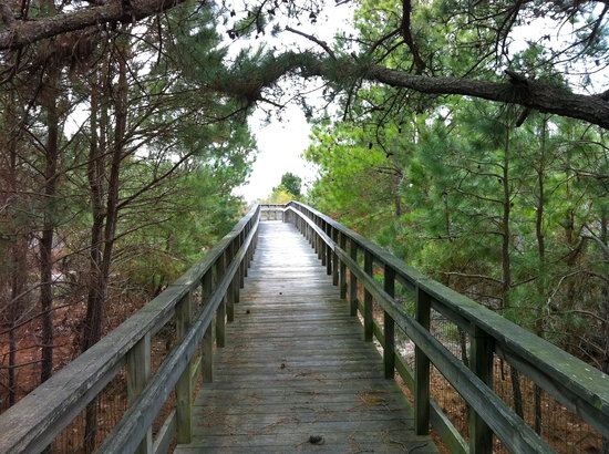 Cape Charles, VA: One of the boarded walks to the bluffs over the Chesapeake Bay