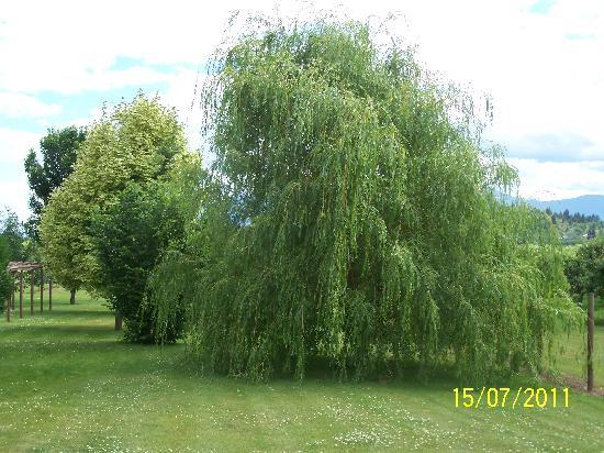 Bavarian Orchard Motel: Grassy area