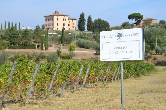 Relais Villa Grazianella - Fattoria del Cerro: Surrounding Vineyards