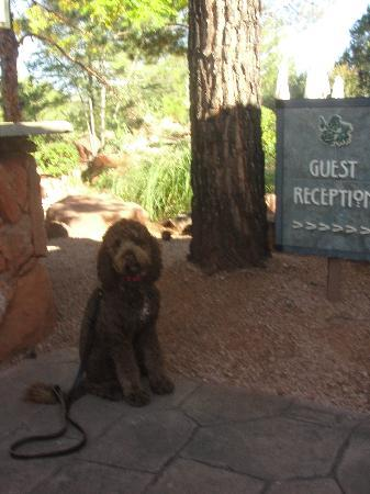 The Lodge at Sedona: The Dog Friendly Lodge at Sedona