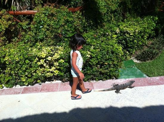 Grand Bahia Principe Coba: Animalitos!!!