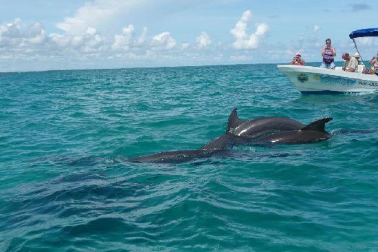 Grand Palladium Colonial Resort & Spa : Delphins @ Sian Ka'an