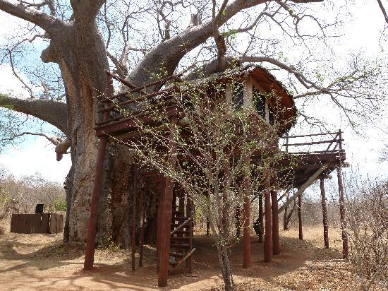 Tarangire National Park, Tanzania: the treehouse