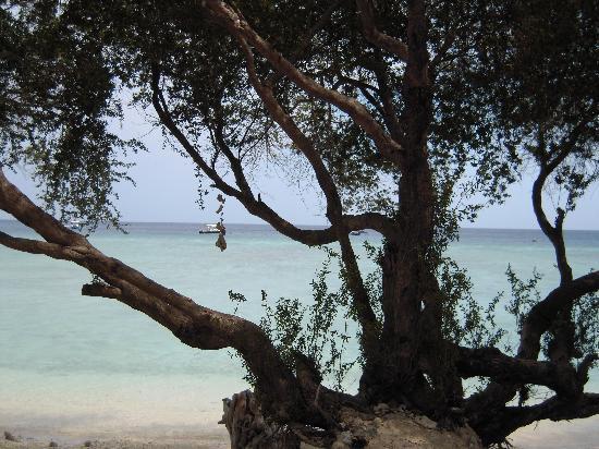 Alam Gili: schöner Strand