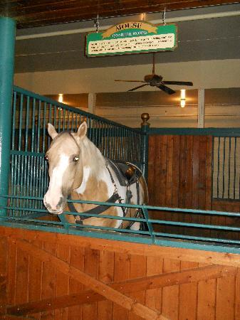 Dolly Parton's Stampede Dinner Attraction: mouse the horse