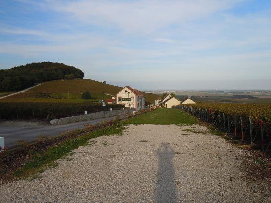 Les Grappes d'Or : la tenuta con le vigne