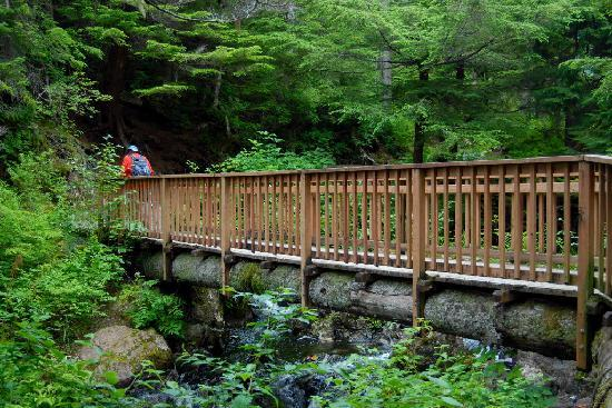 Heart Lake Trail : On the trail