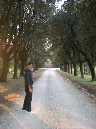 Tenuta Di Fassia: Il viale alberato...