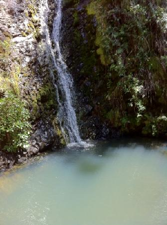 Shoal Bay Estate, Great Barrier Island: fitzroy waterfall